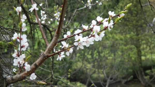 Японский садик в Ботаническом саду