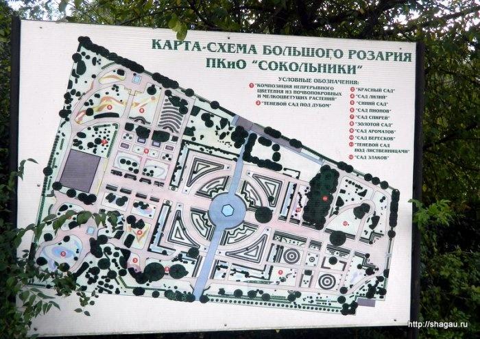 Большой розарий в Сокольниках, Москва