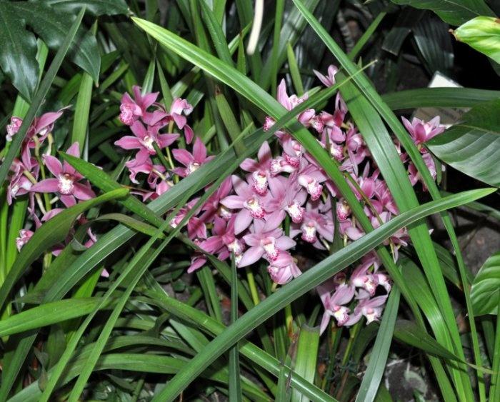 IV Фестиваль орхидей