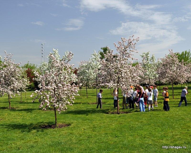 Цветение молодых деревьев у Дворца