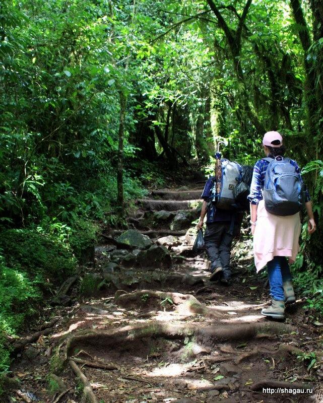 Дорога на Килиманджаро