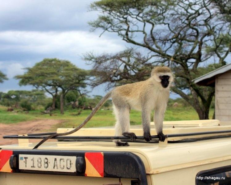 Парк Серенгети, Танзания