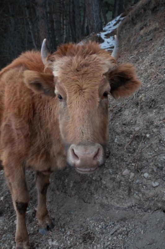Животные, Грузия