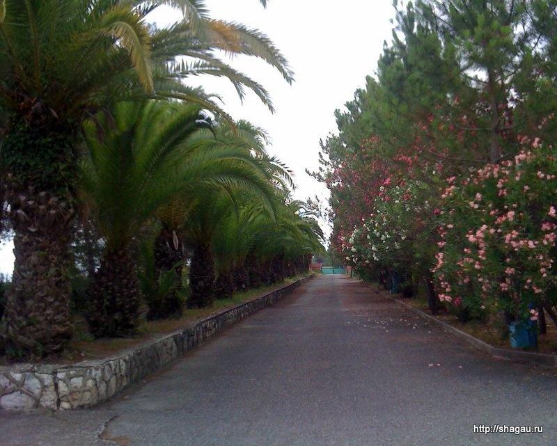 Пальмовая аллея на территории отеля