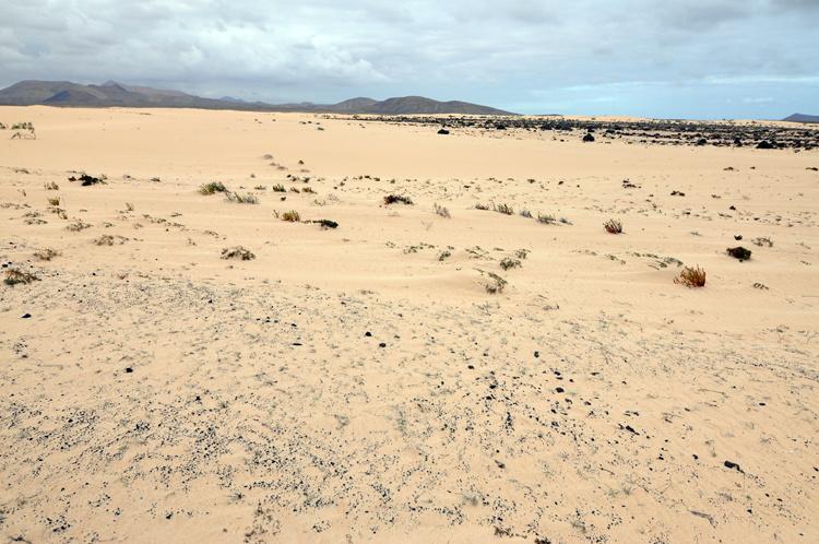 Тоже дюны в Корралехо на Фуэртевентуре
