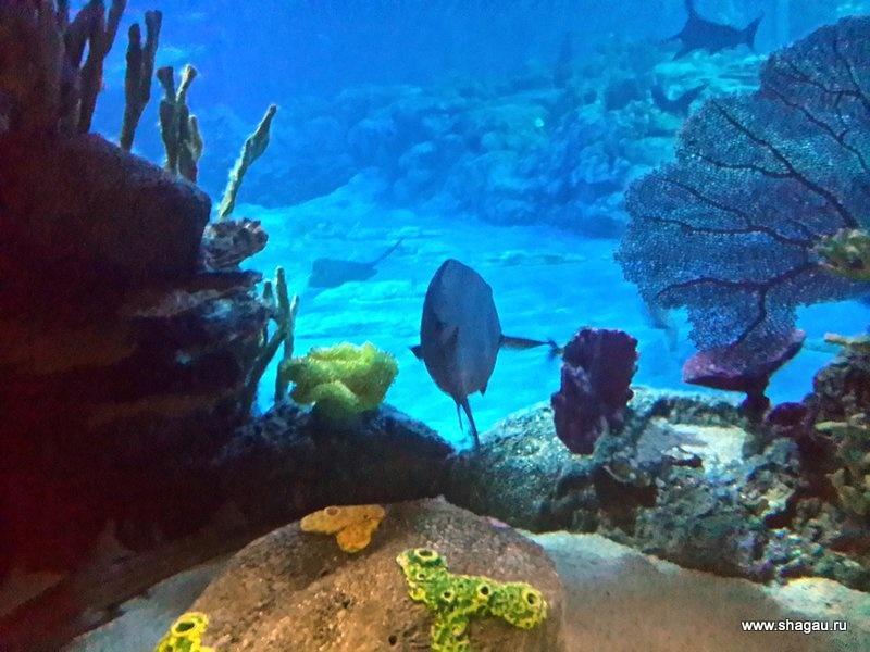 Океанариум в Ocean Park