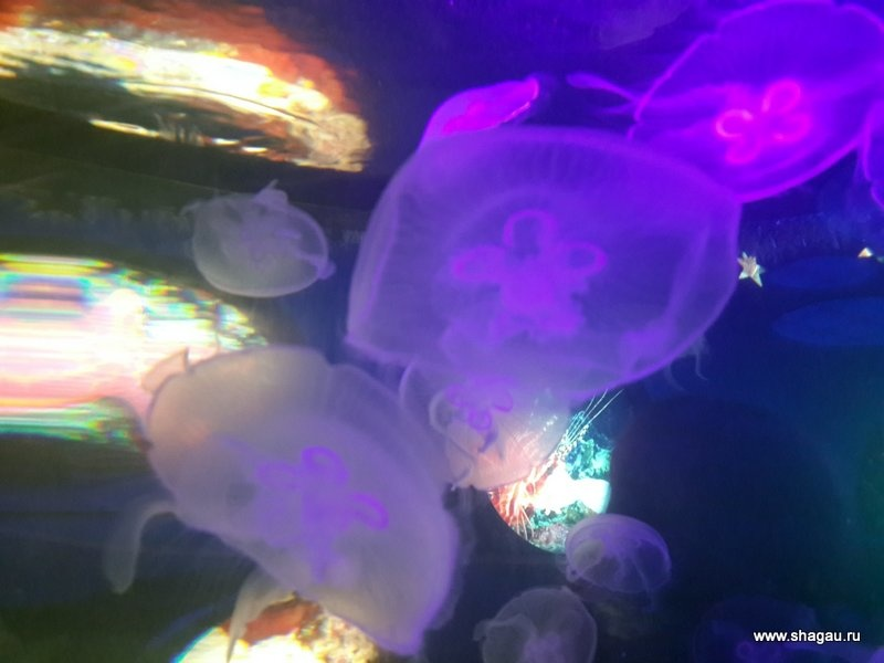 Медузы, бееее