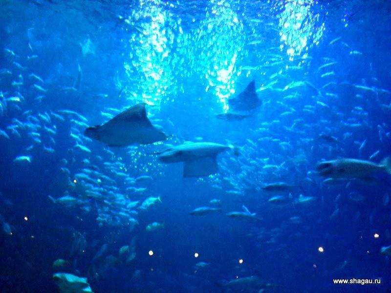Красивый океанариум