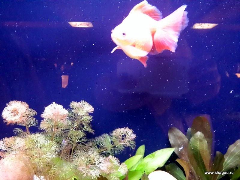 Эй, золотая рыбка!