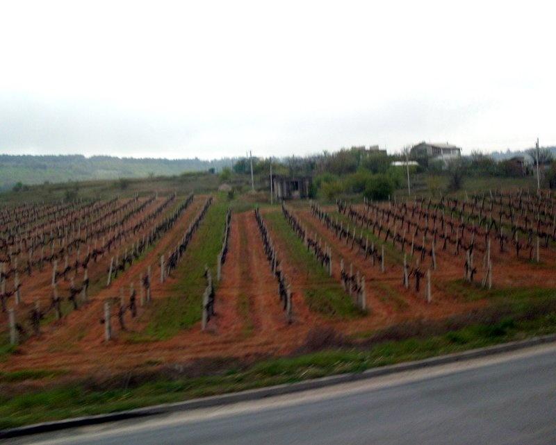 Виноградники Инкермана