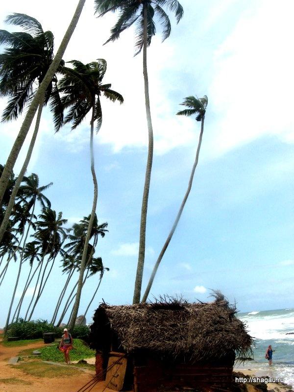 Растительность на Шри-Ланка