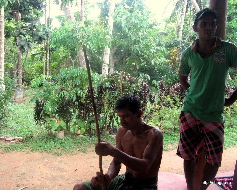 Ланкийцы обрабатывают корицу