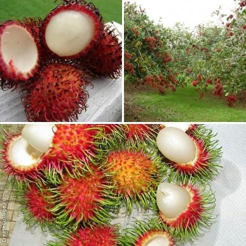Рамбутан фрукт