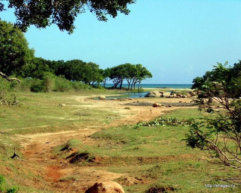 Экскурсии на Шри-Ланке: где купить