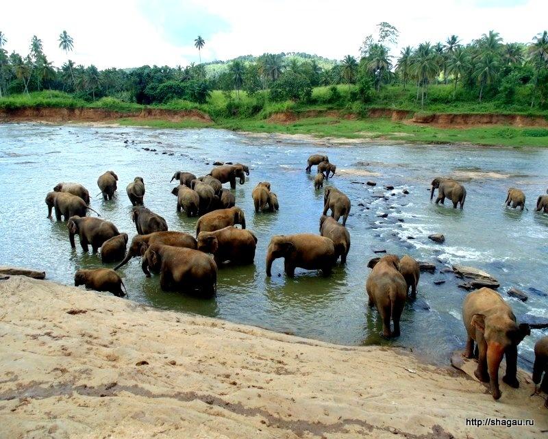 В национальных парках Шри-Ланки
