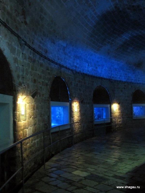 Аквариум в Дубровнике