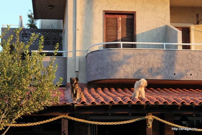 Собачки на крыше