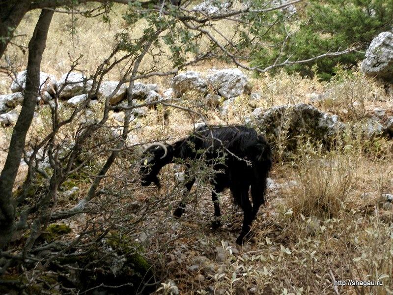 Горные козы в заповеднике