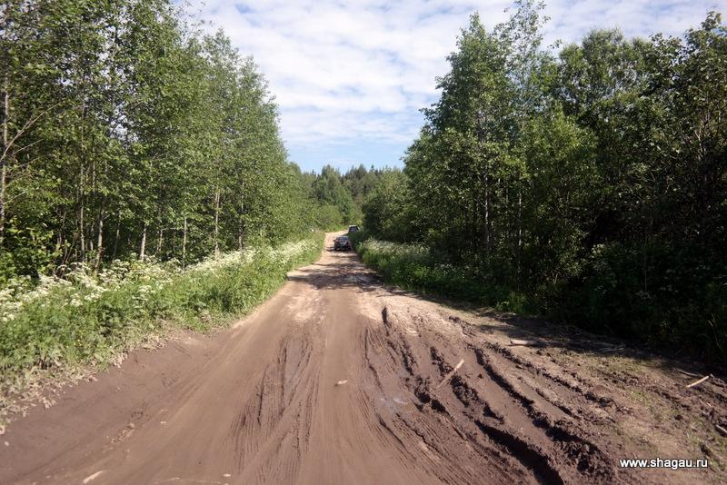 Лес в Карелии