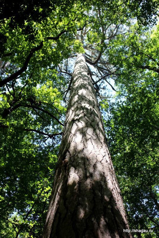 Деревья на Ай-Петри