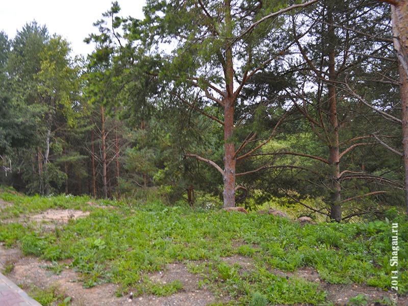 Лес с одной стороны гостиницы