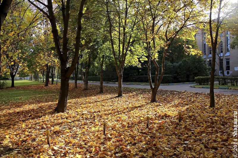 Золотая осень около Тимирязевской академии