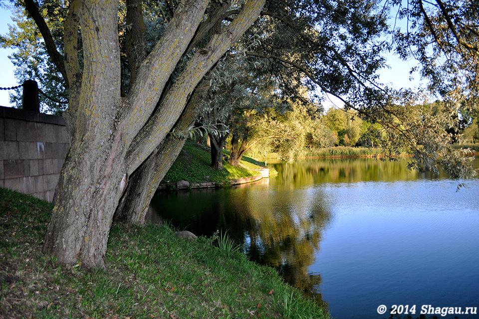 Старые деревья у воды