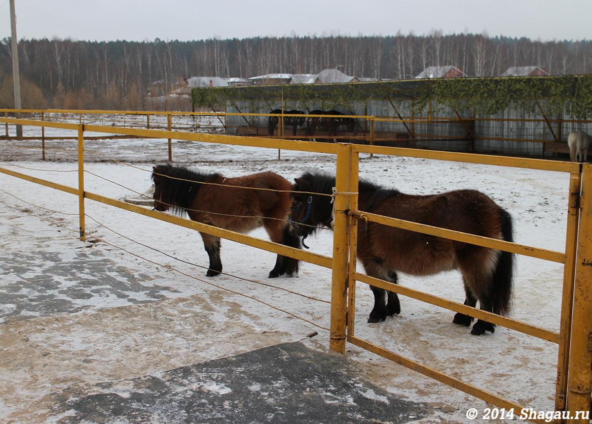 Мини-лошадки на ферме