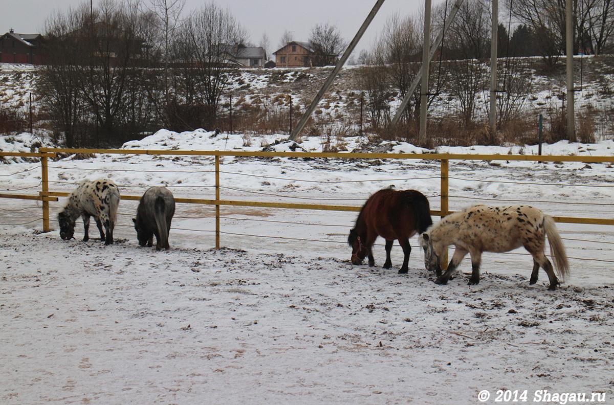 Мини лошади