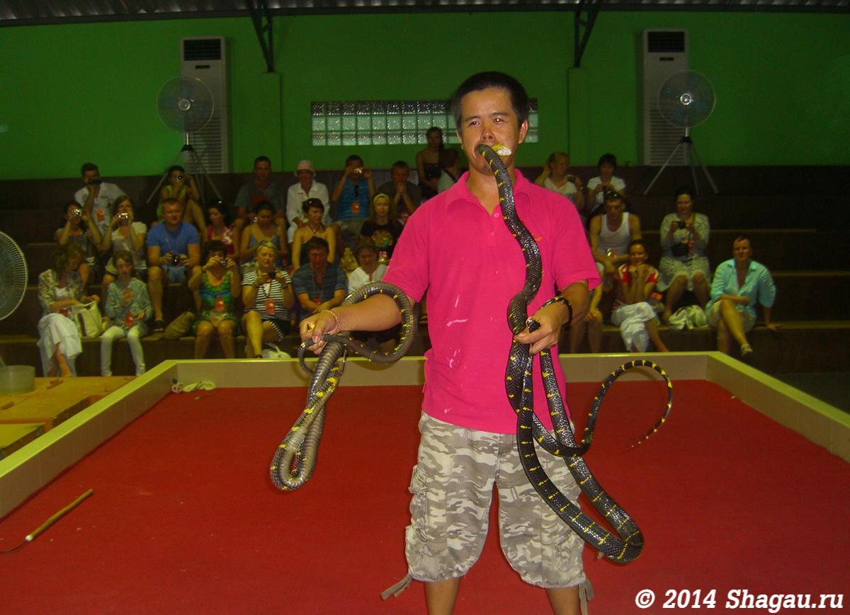 Змеиное шоу
