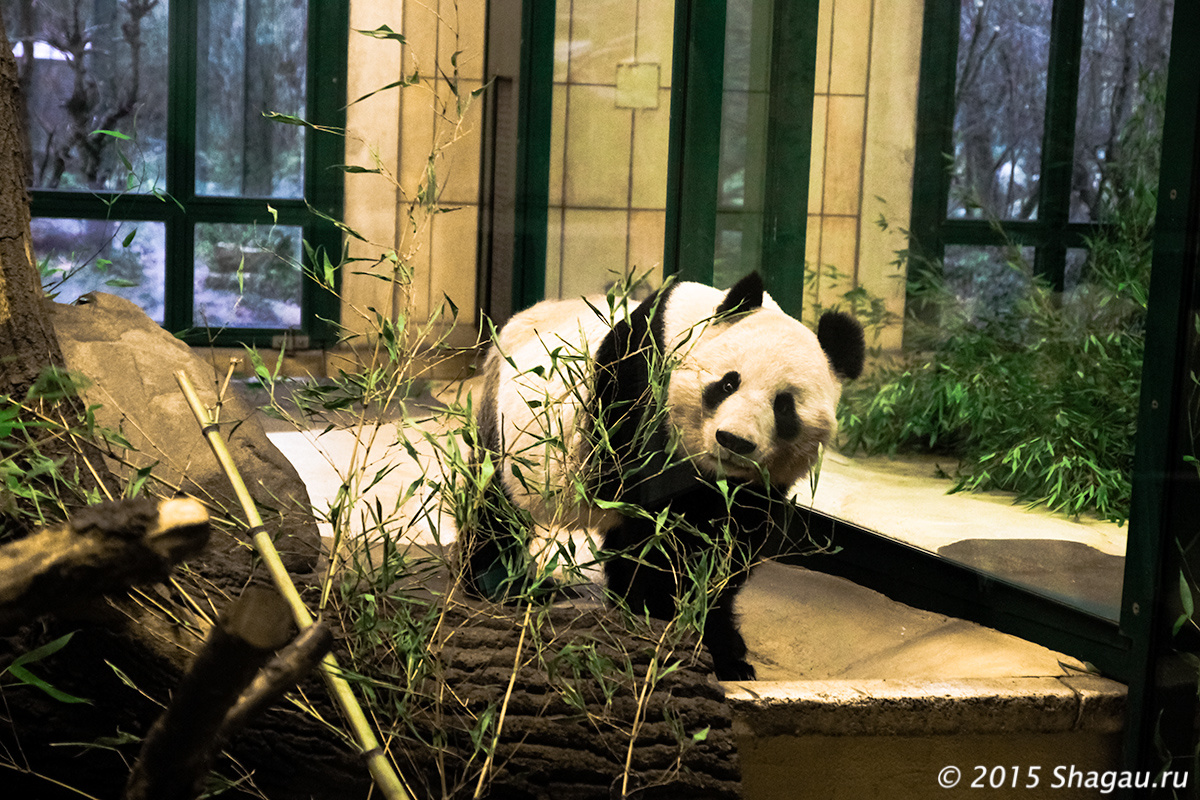 В зоопарке Шенбрунна