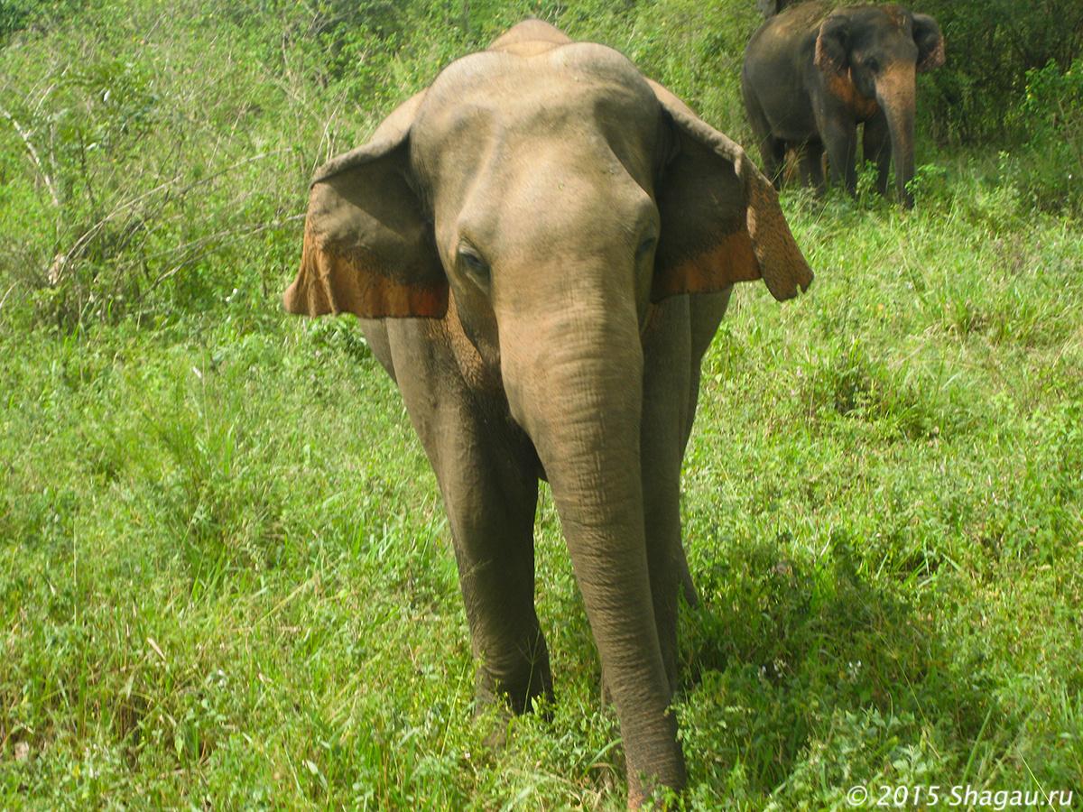 В слоновьем заповеднике