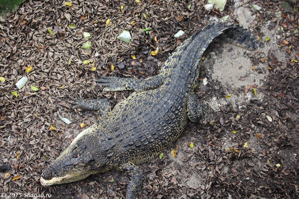 Крокодиловая ферма на Самуи