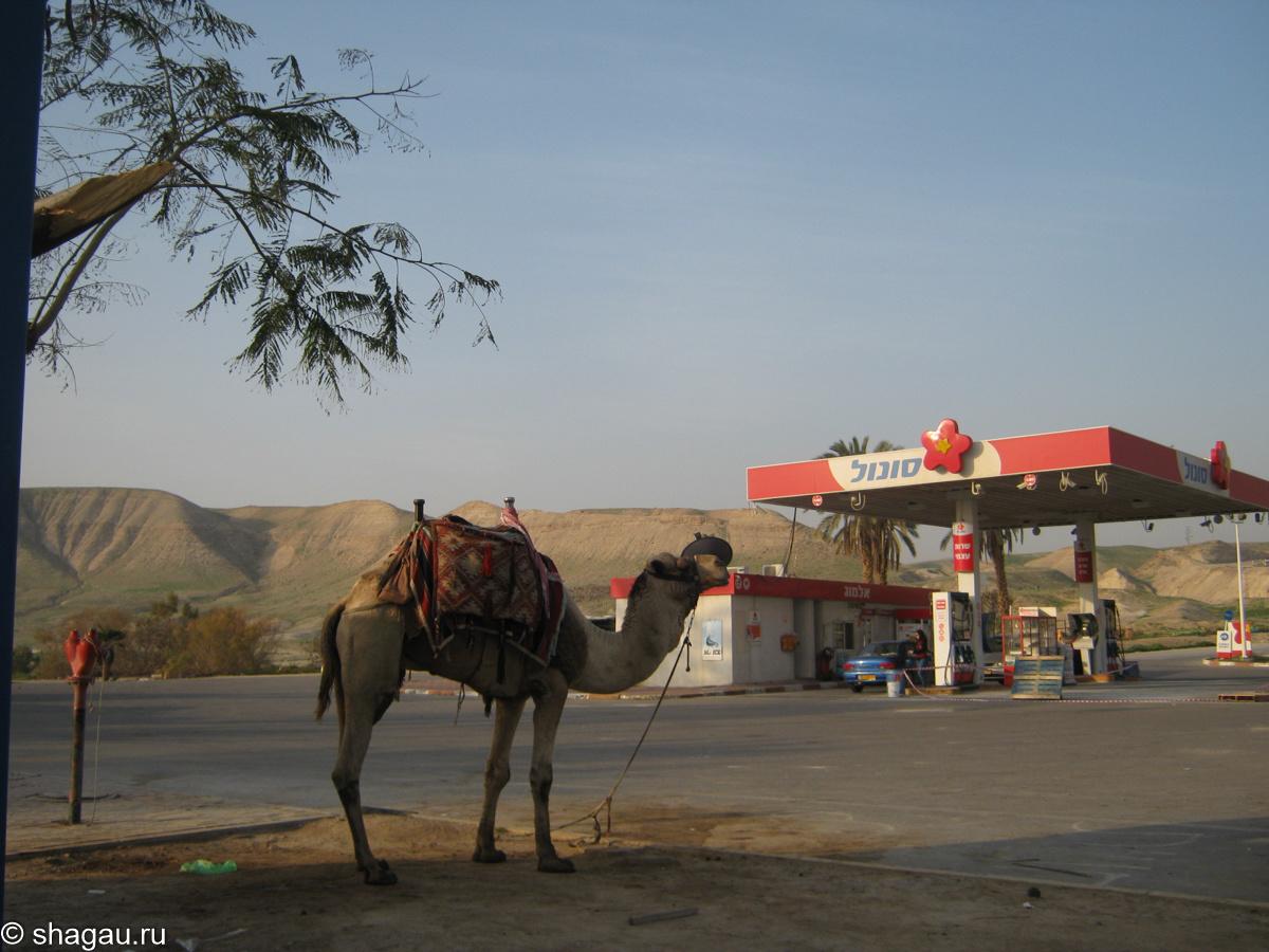Верблюд на заправке
