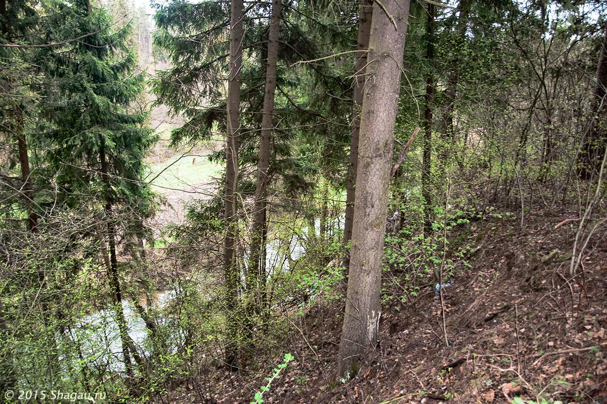 Берез реки Сторожки