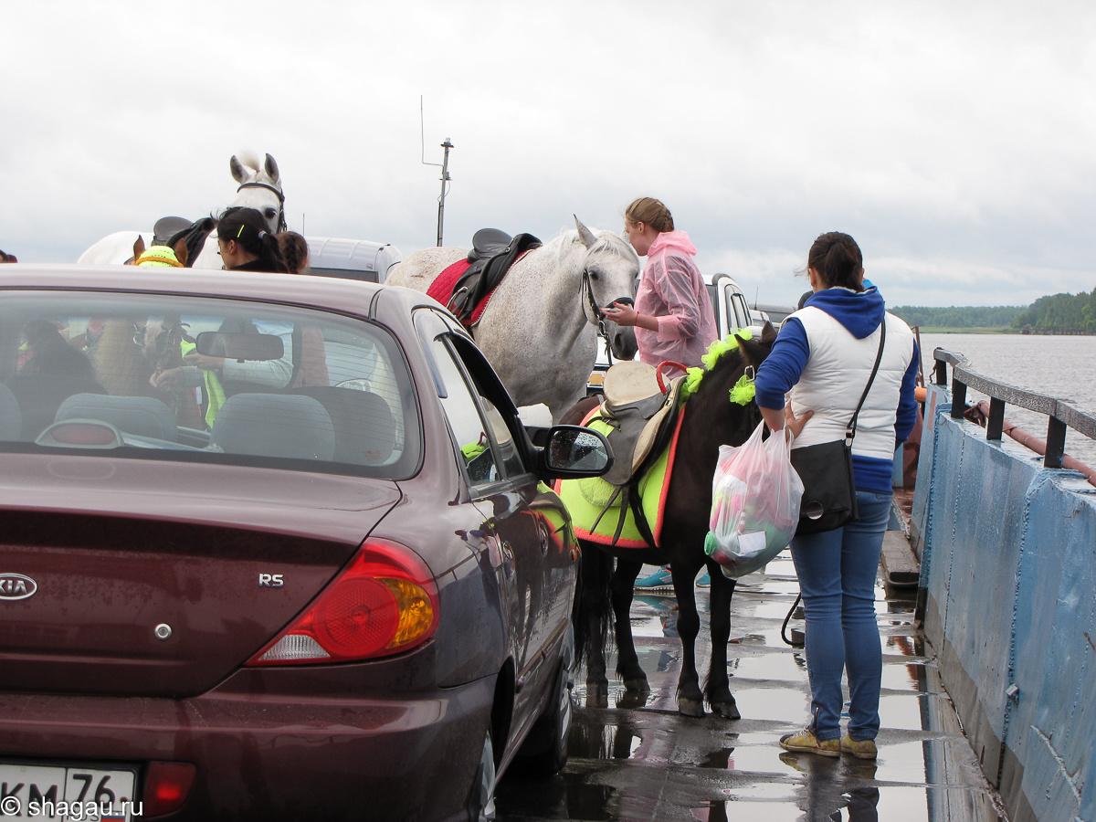 Лошади едут на палубе парома на день Мыши