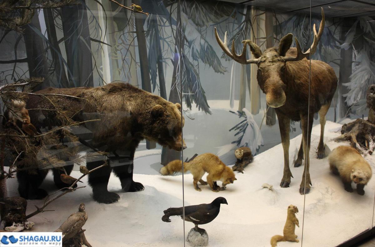 Дарвиновский музей Москва