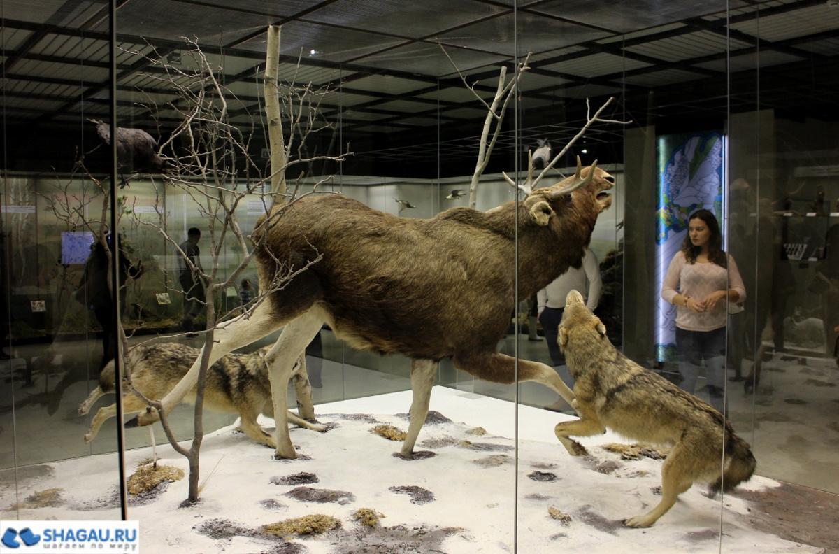 Дарвиновский музей в Москве не только для детей