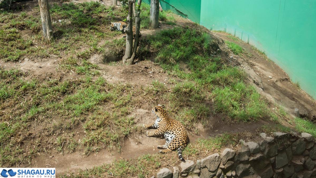 Зоопарк Лимы
