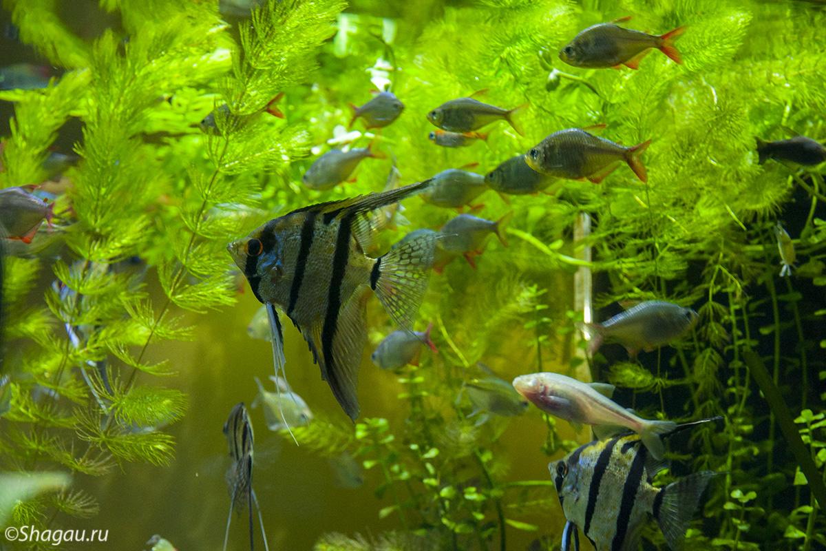 Москвариум. Рыбки