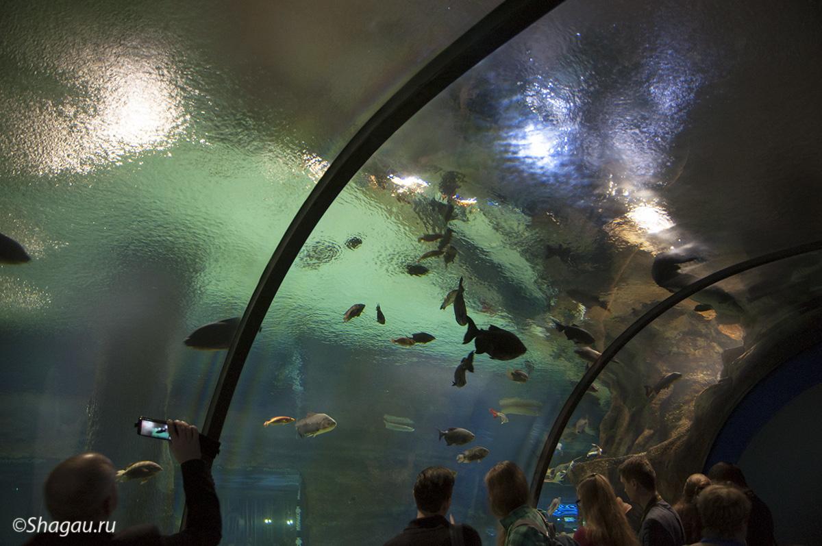 Москвариум. Водный туннель