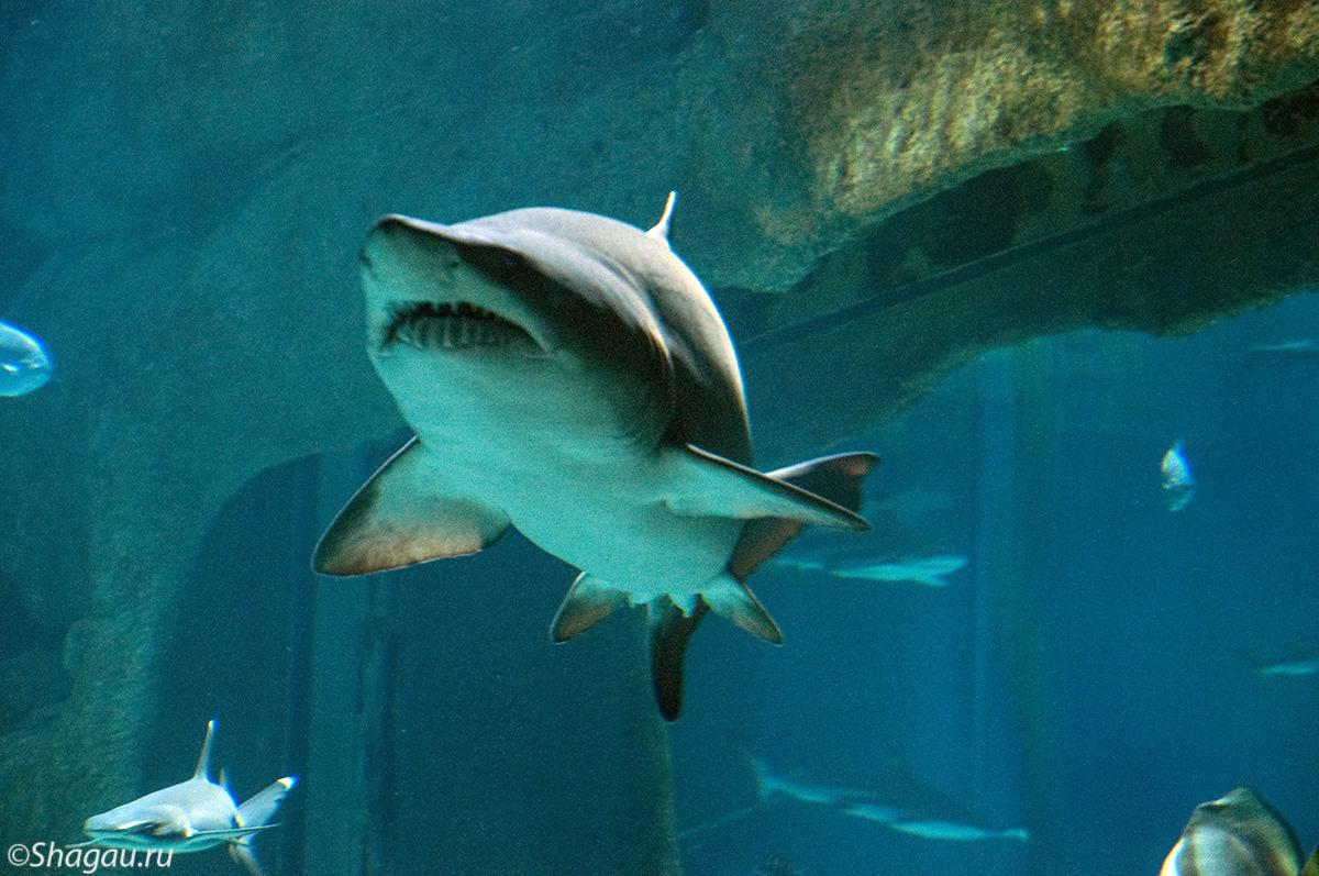 Москвариум. Акула