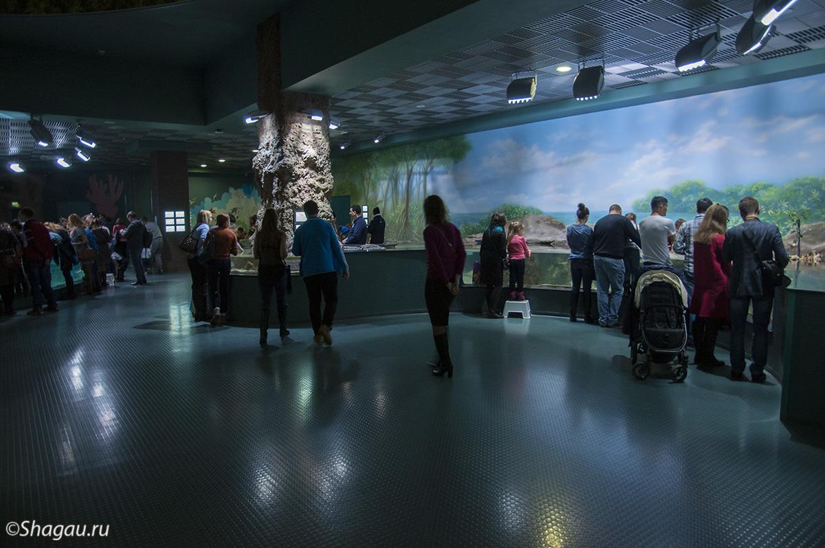 Москвариум. Интерактивная зона