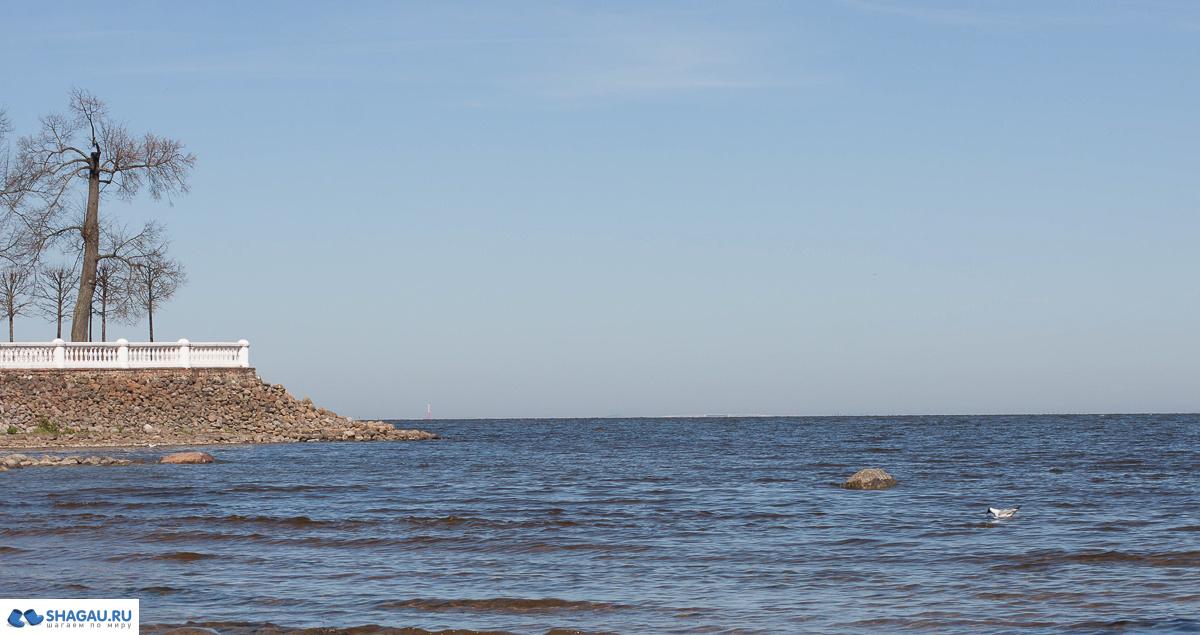 На берегу Финского залива