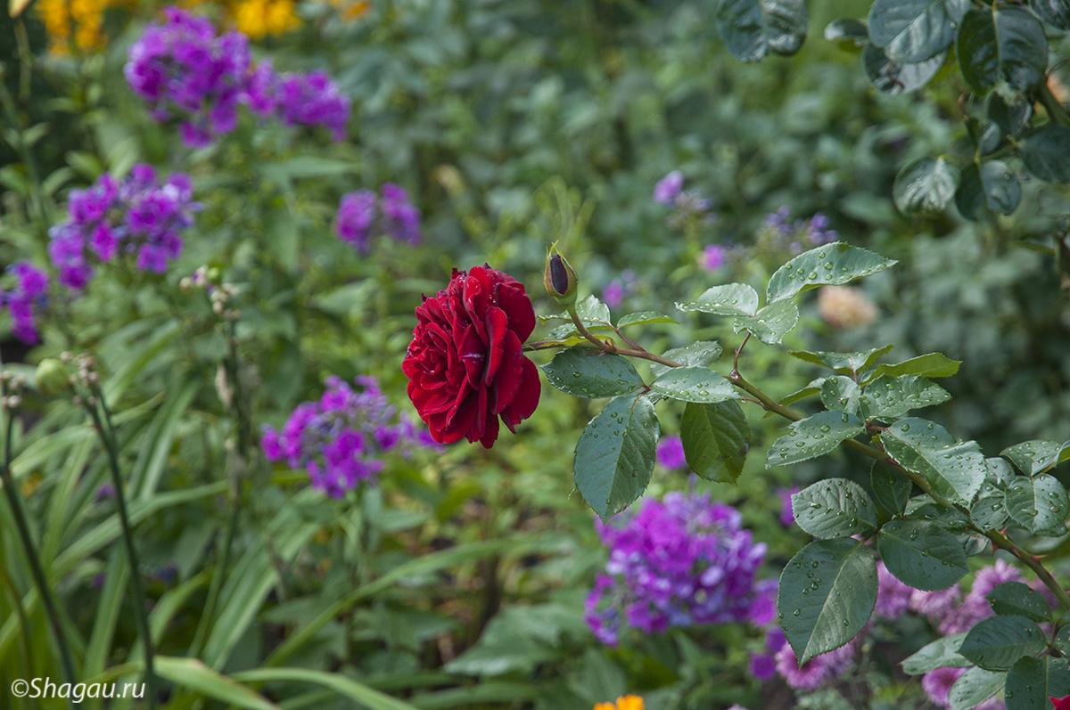 Цветы на церковной территории