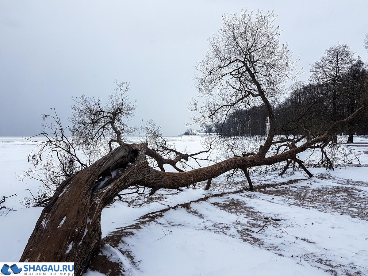 v-piter-zimoy-43-of-74