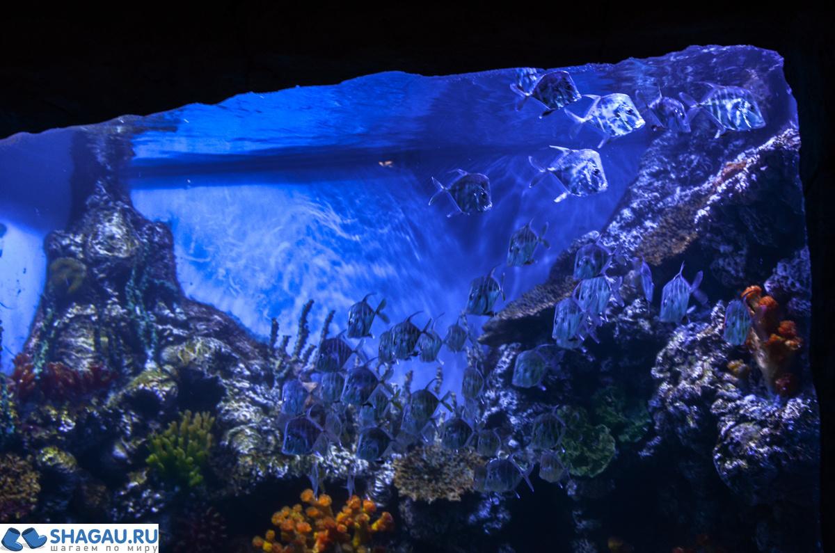 верба океанариум в вегас крокус сити фото собака обожает