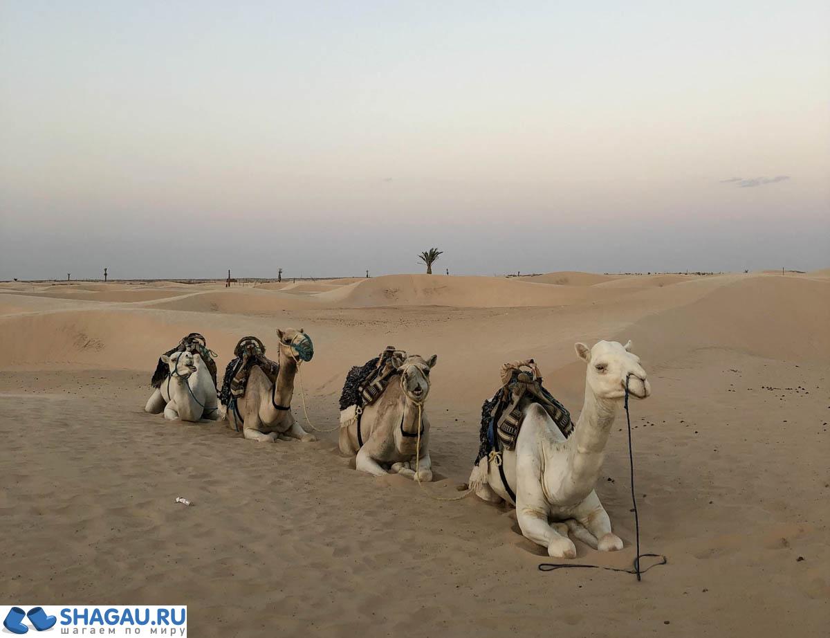 Пустыня Туниса